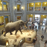 Natural-History-Museum-Lobby-150x150